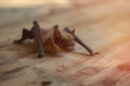 The bat sits on a wooden table Stockfoto