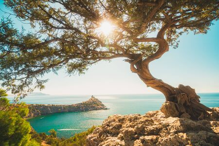 Bellissimo albero di ginepro sul bordo di una scogliera che si affaccia su un promontorio nel mare e il sole tra i rami Archivio Fotografico