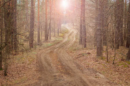 Forest winding road trail among tall pines in early spring. Landscape 免版税图像