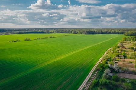Picturesque green farming fields with beautiful blue sky with clouds and forest on the horizon. Aerial view
