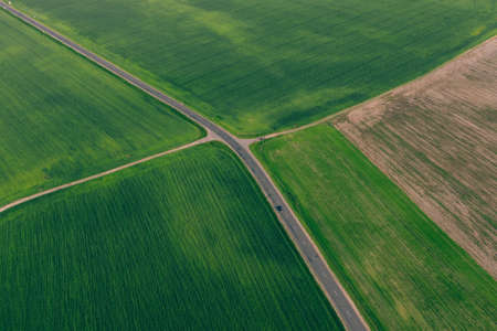 Highway between green fields of agriculture, wheat crop in the fields. Aerial view