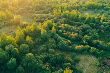 Warm sunset light shines on a forest with deciduous trees. Spring landscape aerial view