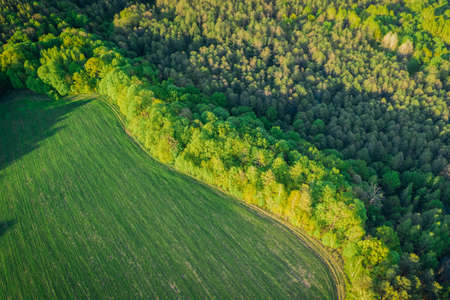 Spring green forest from aerial view in the sunset rays of the evening sun. Mixed forest with deciduous trees