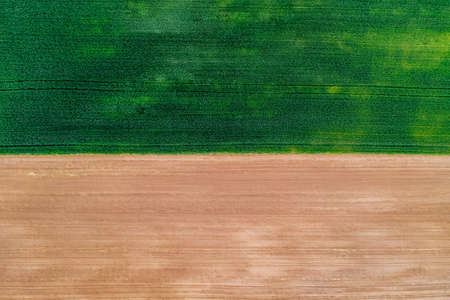 Beautiful field background with wheat and soil divided in half. View from above