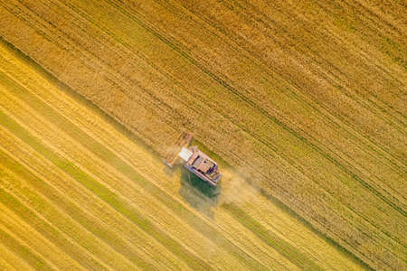 Harvesting wheat, the combine-harvester harvests ripe rye in the field. A combine-harvester farmer working in the field. Aerial view