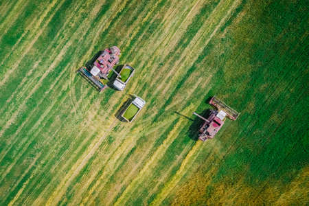 Two harvesters in the fields of wheat are harvesting in a truck. Harvest season, Belarus. Aerial view