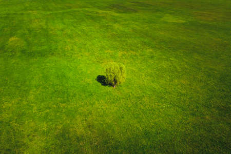 Lonely tree in a green rural field. Summer landscape bright sunny day nature aerial view
