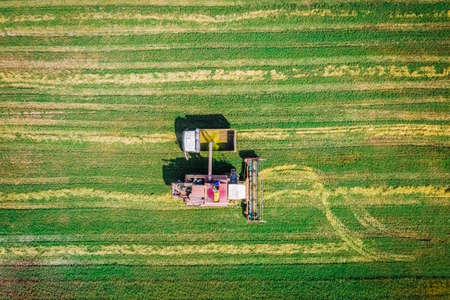 Beautiful harvester to truck clean ripe harvest in the farm field. Flat view from flight altitude