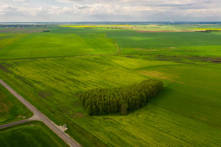 Agricultural fields of Belarus. Plain in the foreground a small forest. View from above