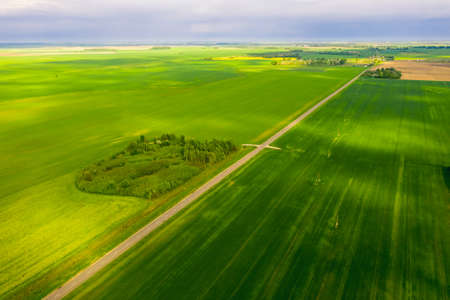 Bright green fields of Belarus sown with wheat. Aerial view 免版税图像