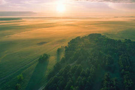 Aerial view - Green flat fields in the fog early in the morning. Forest in the morning sun