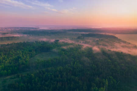 Fog in the morning in a pine forest with a view from above.