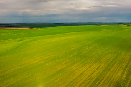 View from above - green smooth fields sown with rapeseed in Belarus