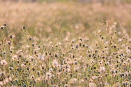 Plants dandelions - glass flowers