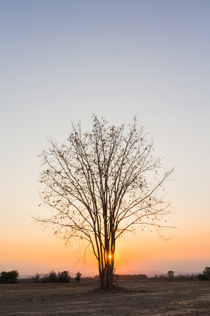 Sunset on silhouette of dried tree in countryside Stock Photo