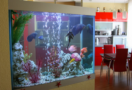 Aquarium in the house 新闻类图片