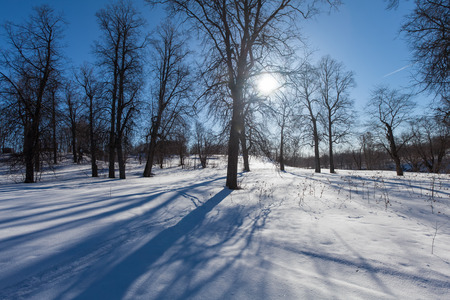 footsteps: The winter park with snow and footsteps
