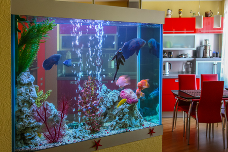 water feature: Aquarium with fish for an interior in the house.