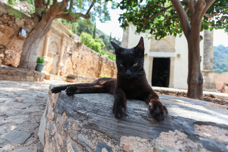 cat island: Black cat near the stone Greek church. Island Crete. Greece Stock Photo