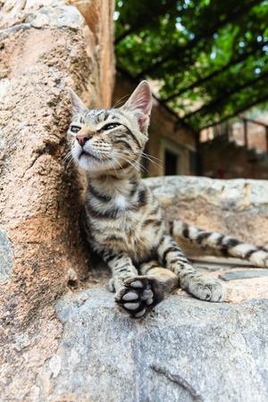 Young cat near the city stone wall. Island Crete. Greece