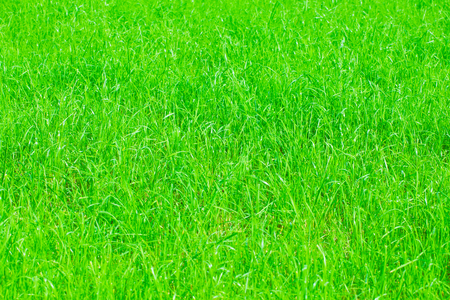 Background  texture of green grass  with color shade yellow green  with blurred and hazy effects Reklamní fotografie