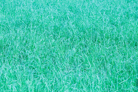 Background  texture of green grass  with color shade  turquoise  with blurred and hazy effects Reklamní fotografie