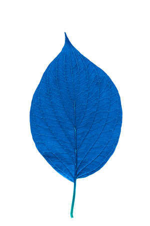Blue leaf with texture isolated on white