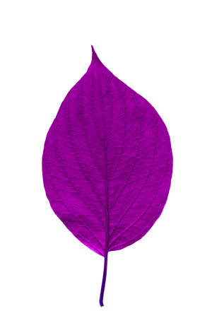 Purple leaf with texture isolated on white 스톡 콘텐츠