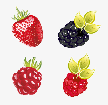foxberry: Set of fresh berries illustration Illustration