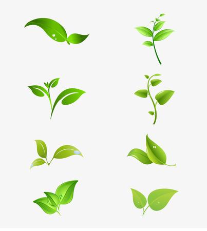 natural symbols with leaf