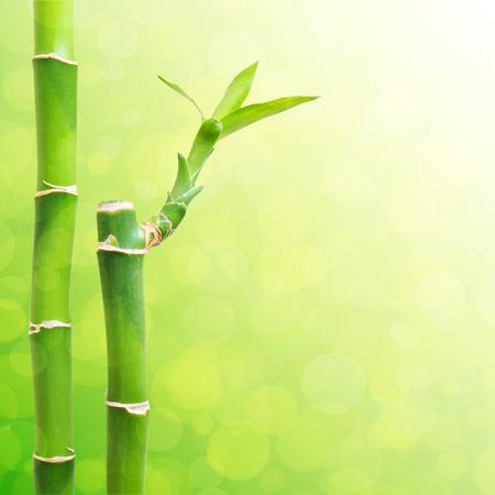 jungle border: Beautiful Bamboo Border