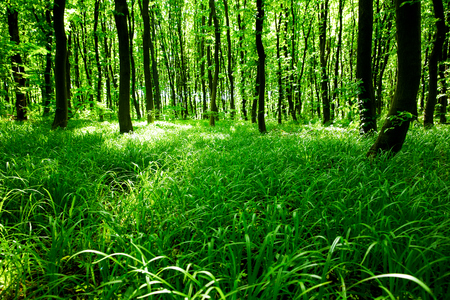 uplifting: green forest Stock Photo