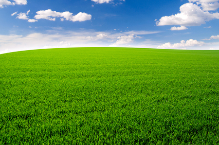 champ vert: Green field and blue sky