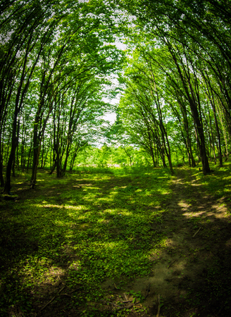 Spring forest background photo