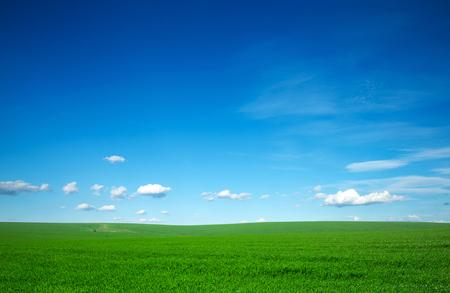 field of grass and perfect blue sky Foto de archivo