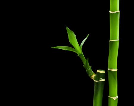 bamboo stalks on black background Stock Photo