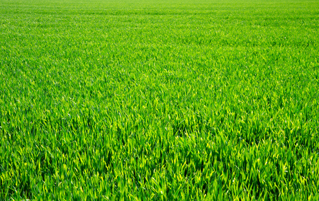 grassy plot: Green lawn for background