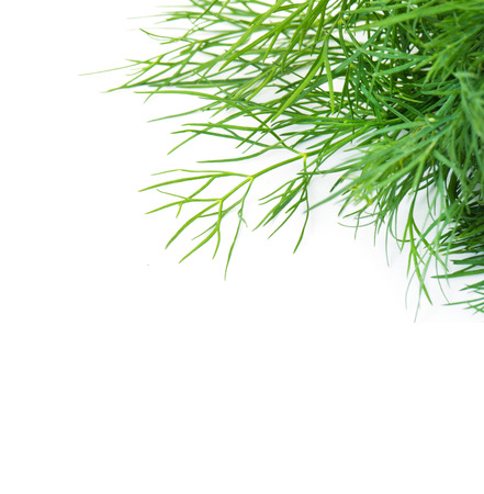 dill: dill isolated in white Stock Photo