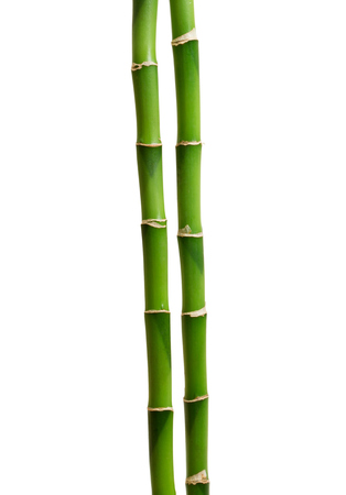 green bamboo isolated on white Zdjęcie Seryjne - 34214664