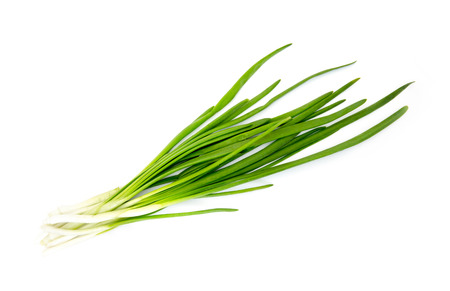 Green Onion on white background 写真素材