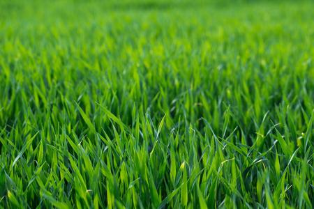 Background of a green grass Zdjęcie Seryjne