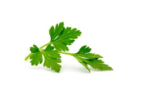 parsley isolated on white Stockfoto