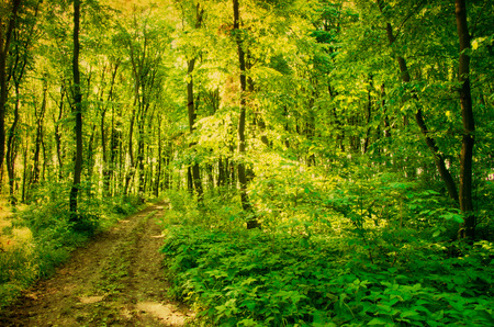 elusive: green forest background in a sunny day Stock Photo