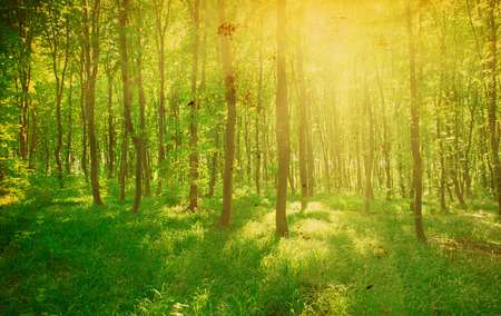 uplifting: green forest background in a sunny day Stock Photo