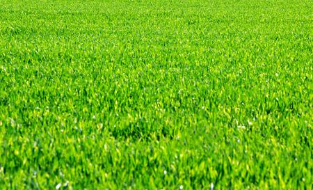 spring  green: Grass background