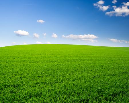 the clear sky: el cielo y el campo de hierba de fondo