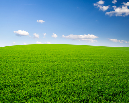 grass field: sky and grass field background Stock Photo