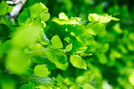 green trees: green leaves on the green backgrounds