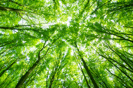 beautiful green forest Imagens