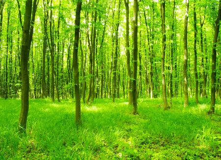 backgorund: Nature backgorund